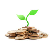 Money seedling Stock Photography