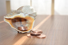 Money and shell Royalty Free Stock Images