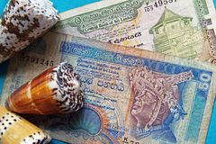 Money of Shri Lanki. Two denominations of island Shri Lanka and three shells Royalty Free Stock Image