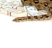 Money snake Stock Photo