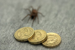 Money spider Stock Photo