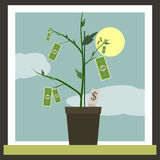 Money Sprouting - dollar bills sprouting from Royalty Free Stock Images