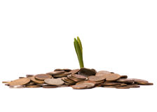 Money sprouts Royalty Free Stock Image