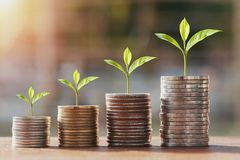 Money stack and young plant growing step. concept finance. Accounting stock photo