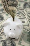 Money stuffed into piggy bank Stock Image
