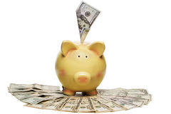 Money stuffed into piggy bank Stock Photography