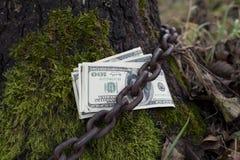 Money Tethered To Tree Stock Photo