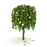 Money tree. Stock Images