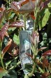 Money tree. Money in tree stock photo