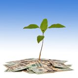 Money Tree Royalty Free Stock Photography