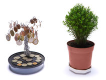 Money tree. And green tree Stock Photography