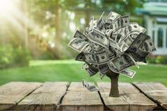Free Money Tree Royalty Free Stock Photos - 118919748