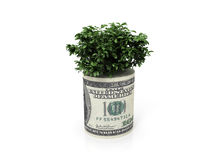 Money tree. Tree growing out of a roll of dollars Royalty Free Stock Image