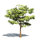 Money Tree. Realistic 3D render of a tree with 100 dollar leafs Vector Illustration