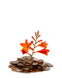 Money tree Stock Image