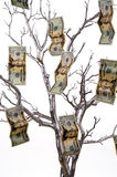 Money Tree. A silver tree with money growing on it royalty free stock photo