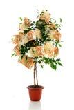 Money tree. Royalty Free Stock Photo