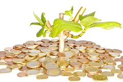 Money tree. With euro coins Royalty Free Stock Photos