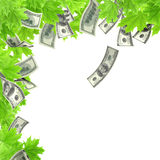 Money tree. Isolated over white Stock Photos