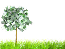 Money tree. Isolated over white Royalty Free Stock Photos