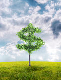 Money tree. Investment growth income interest savings economy funds stock market financial business Royalty Free Stock Images