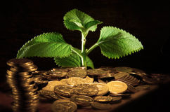 Money Tree. Mint plant with money coin surrounding it Royalty Free Stock Image