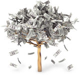 Money Tree. Dollar grows on a tree, money Tree, on a white background, 3d render Stock Photos