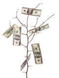 Money tree Royalty Free Stock Images