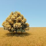 Money tree. Automne money tree in the middle of wheat field Stock Photo