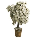 Money Tree. Growing dollars on white background