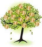 Money  tree. Stock Photos