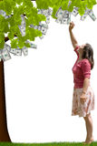 Money Tree. A lady reaching up to pick money from a tree stock photo