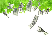 Money tree. Isolated over white Stock Photo