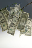 Money Tree. Cash growing on tree branches Stock Images