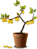 Money tree. With golden coins stock illustration