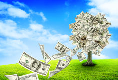 Free Money Tree Stock Images - 43292774