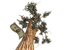 Money  tree. 3d render of money growing on a tree Royalty Free Stock Photos