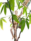 Money Tree. Wooden Mannequin sitting in a money tree royalty free stock images