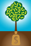 Money Tree. A money tree representing present and future growth Stock Image