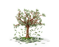 Money tree with bills growing on it and lying Royalty Free Stock Images