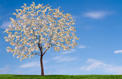 Money tree on blue sky, and grassy feild Stock Photos