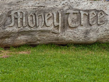 Money tree carving. Money tree with coins embedded royalty free stock image