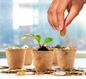 Money tree and coins Royalty Free Stock Photography