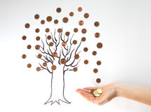 A money tree stock images