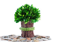 Money tree concept on isolated white background Stock Photography