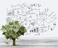 Money Tree Stock Photo
