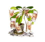 Money tree. Decorative tree with cash notes on branches on a white background Royalty Free Stock Photo