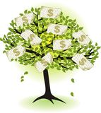 Money  tree.with dollar banknotes Stock Photo