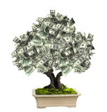 Money tree with dollar banknotes Stock Photo