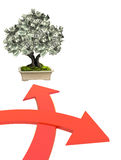 Money tree with dollar banknotes Royalty Free Stock Images